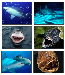 Fearsome Sea Creatures Screensaver